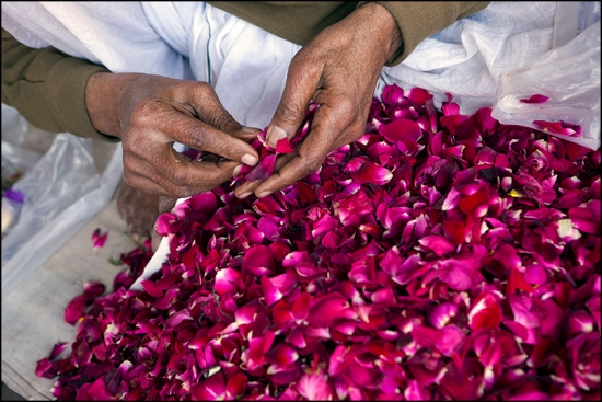 Roses. Old Delhi.
