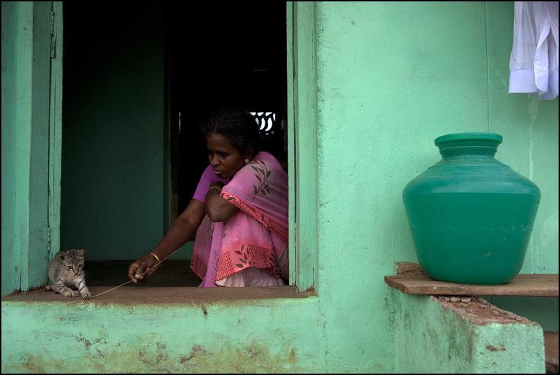 Cat. Karaikudi. Tamil Nadu