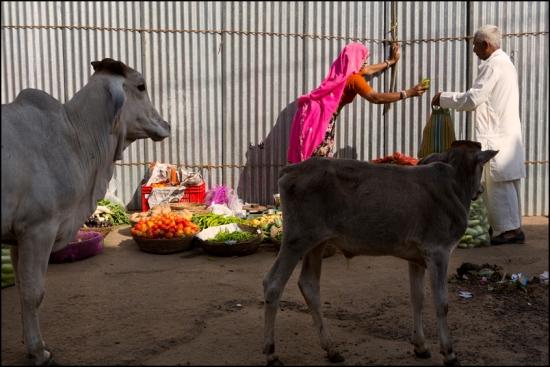 Market. Pushkar. Rajasthan