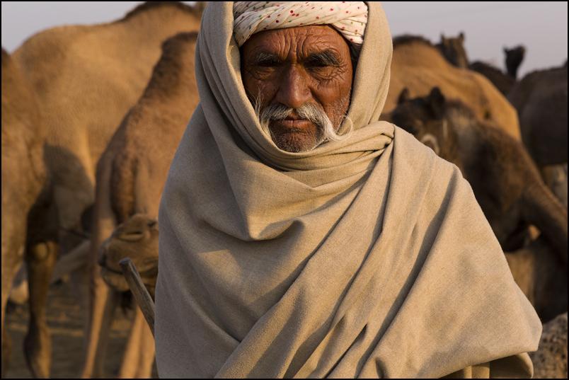 Camelman. Pushlkar