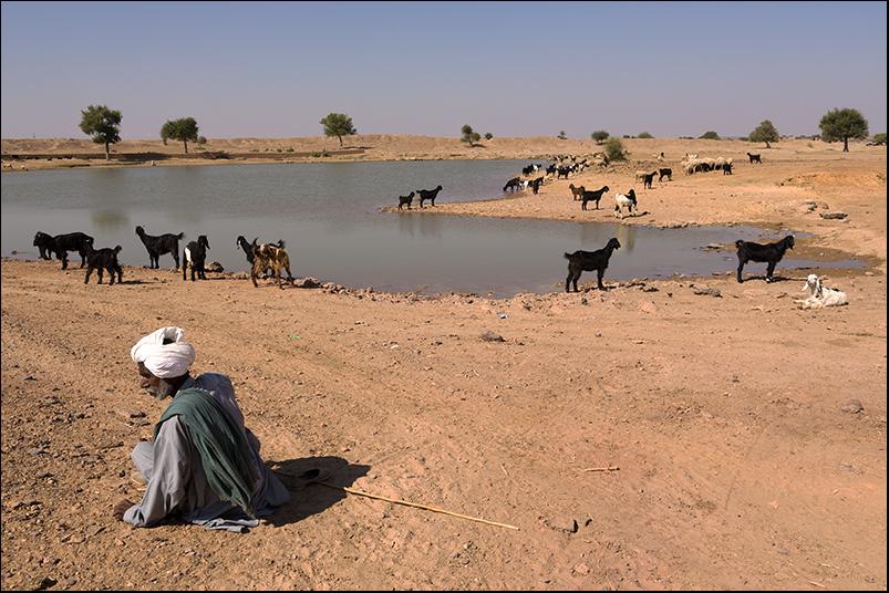A sheperd in the Thar desert. Rajasthan